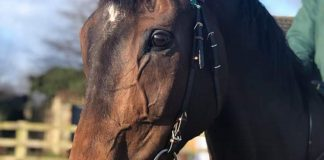 Lady Buttons: In great shape ahead of Cheltenham Festival. Photo: Courtesy Philip Kirby.