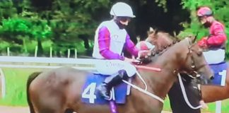 Mark Johnston trained Toussarok (purple sleeves) 5-4f entering the stalls ahead of winning at Newcastle.