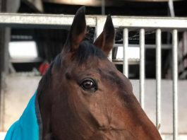 Whoshotthesheriff: back home for tea after finishing second at Carlisle.