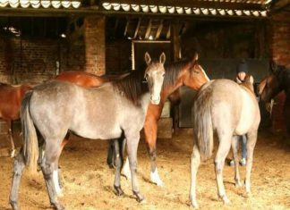 Yearlings formerly in Blue Spinnaker's care 'doing well'