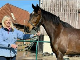 Jayne Sivills: We are absolutely gutted. Once in a lifetime horse and will stay with me forever.