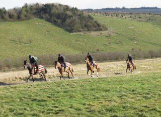 Horses from Alan King's Barbury Castle Yard