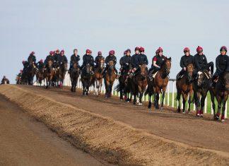 Aidan O'Brien trained horses at Coolmore stud