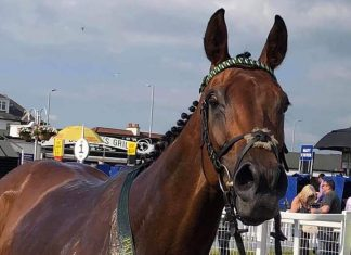 Shine Baby Shine - will be in the winners enclosure soon.
