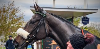 Lady Buttons set for Wetherby