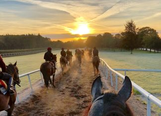 A Simply Beautiful November morning at Ballydoyle, the stable of Aidan O'Brien