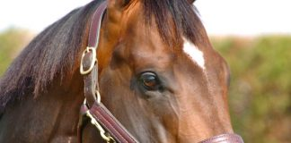Spirit Power followed up a win at Newcastle this month