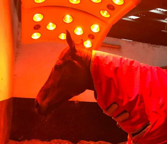 The heat is on for 'Lady' ahead of Cheltenham Festival