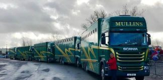 MULLINS ENTOURAGE ROLLS ON TO CHELTENHAM!