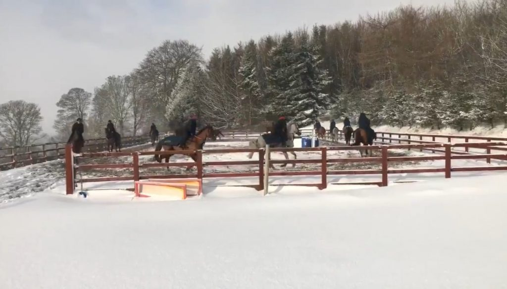 Lake View Lad and stablemates on the gallop at Kinneston, Fife based Nick Alexander stables.