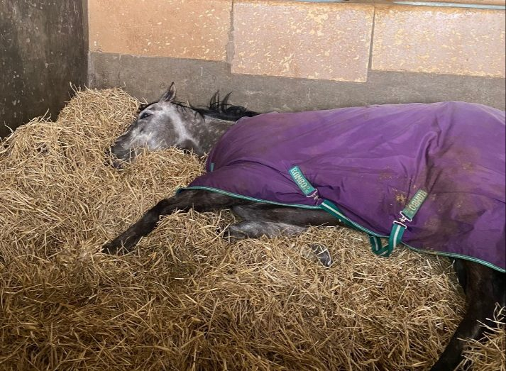Lord Riddiford takes a 'nap' before winning C2 Betway Handicap at Wolverhampton.