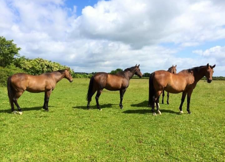 Cheltenham Triumph Hurdle winner Kissair far left, with Arkle winner Tuitchev (far right). Photo: courtesy Nikki Atkinson.
