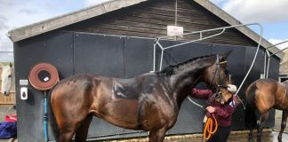 Blazing Port after his race at Kelso.
