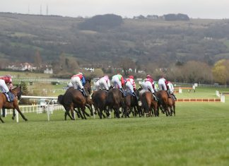 Mount Ida last to first in Challenge Cup Chase Festival win