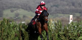 Tiger Roll - Photo courtesy Cheltenham Racecourse Twitter