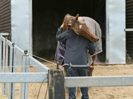 A hug for Definitly Red from trainer Brian Ellison. Photo: Brian Ellison Racing.