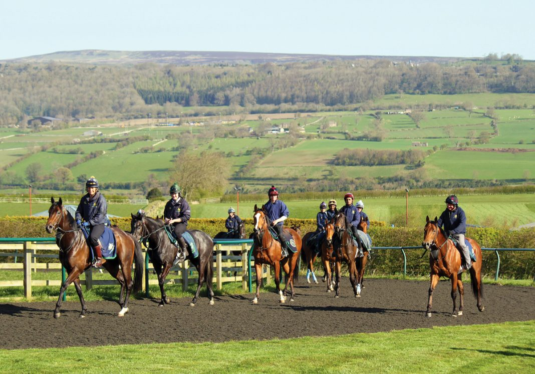 A selection of horses trained by Mark Johnston on the gallops