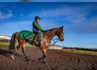 Lady Buttons back in training